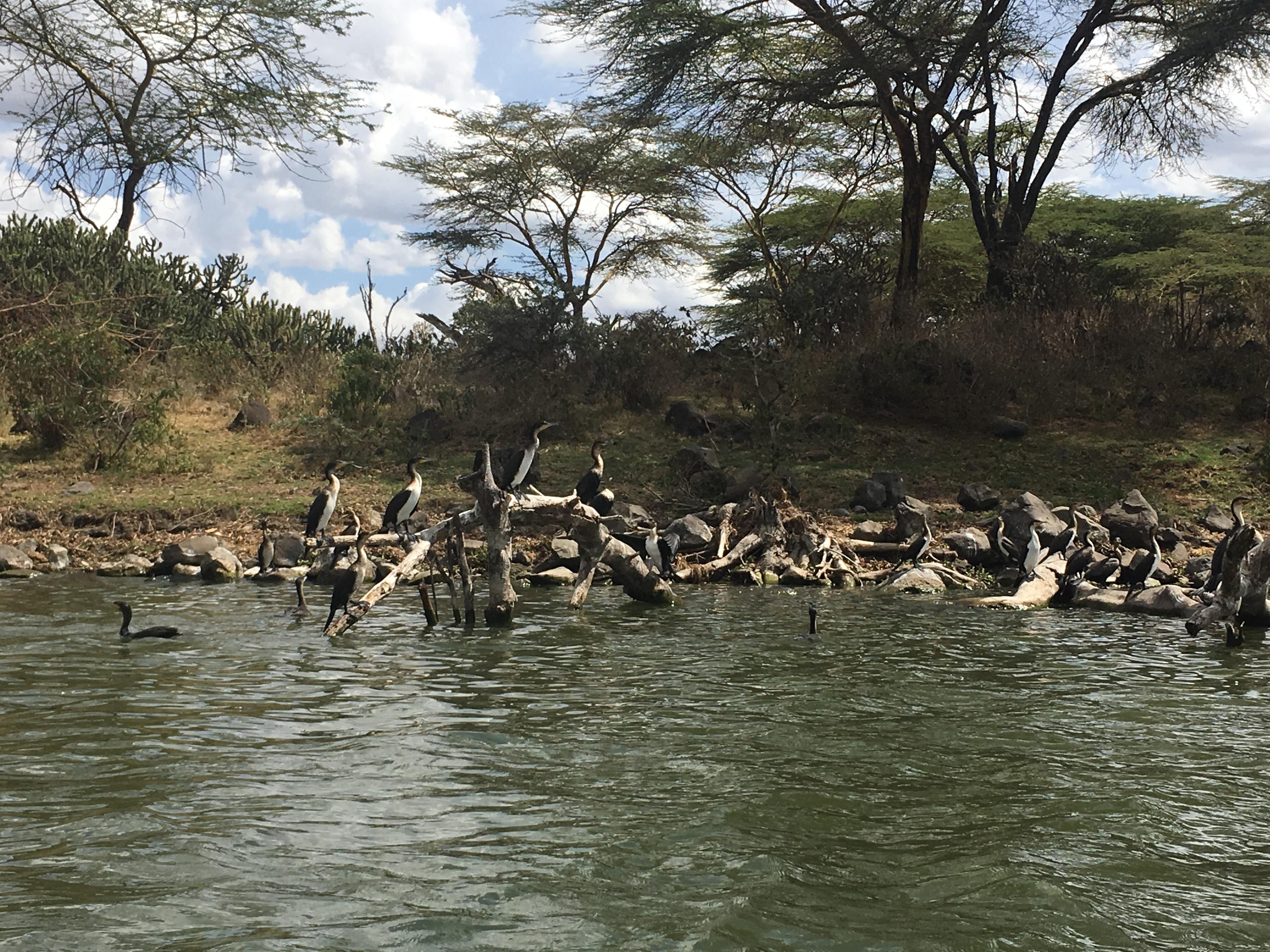 Birds gather on lake naivasha in Kenya